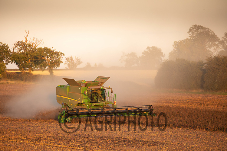 9.9.2020 Harvesting Beans <br /> ©Tim Scrivener Photographer 07850 303986<br />      ....Covering Agriculture In The UK.