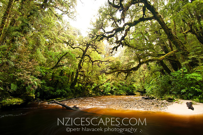 Oparara River in Oparara Valley - Kahurangi National Park, West Coast, New Zealand