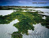 Tom Mackie, LANDSCAPES, LANDSCHAFTEN, PAISAJES, FOTO, photos,+4x5, 5x4, beach, beaches, bladderwrack, coast, coastal, coastline, coastlines, County Galway, Eire, EU, Europa, Europe, Europ+ean, expanse, expansive, green, horizontal, horizontally, horizontals, Irish, large format,low tide, seaweed, shoreline, tida+l,4x5, 5x4, beach, beaches, bladderwrack, coast, coastal, coastline, coastlines, County Galway, Eire, EU, Europa, Europe, Eur+opean, expanse, expansive, green, horizontal, horizontally, horizontals, Irish, large format,low tide, seaweed, shoreline, ti+,GBTM030280-2,#L#, EVERYDAY ,Ireland