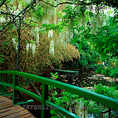 Tom Mackie, FLOWERS, photos, Wysteria Bridge & Punt, Monet's Garden, Giverny, France, GBTM970241-1,#F# Garten, jardín