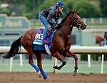 ARCADIA, CA - OCT 31: Oscar Performance, owned by American Racing, LLC and trained by Brian A. Lynch, exercises in preparation for the Breeders' Cup Juvenile Turf at Santa Anita Park on October 31, 2016 in Arcadia, California. (Photo by Zoe Metz/Eclipse Sportswire/Breeders Cup)