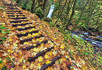 Steps and Bridal Veil Falls with fall color. Columbia River Gorge National Scenic Area. Oregon