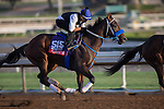 OCT 27 2014:Privare Zone, trained by Alfredo Velazquez, exercises in preparation for the Breeders' Cup Xpressbet Sprint at Santa Anita Race Course in Arcadia, California on October 27, 2014. Kazushi Ishida/ESW/CSM