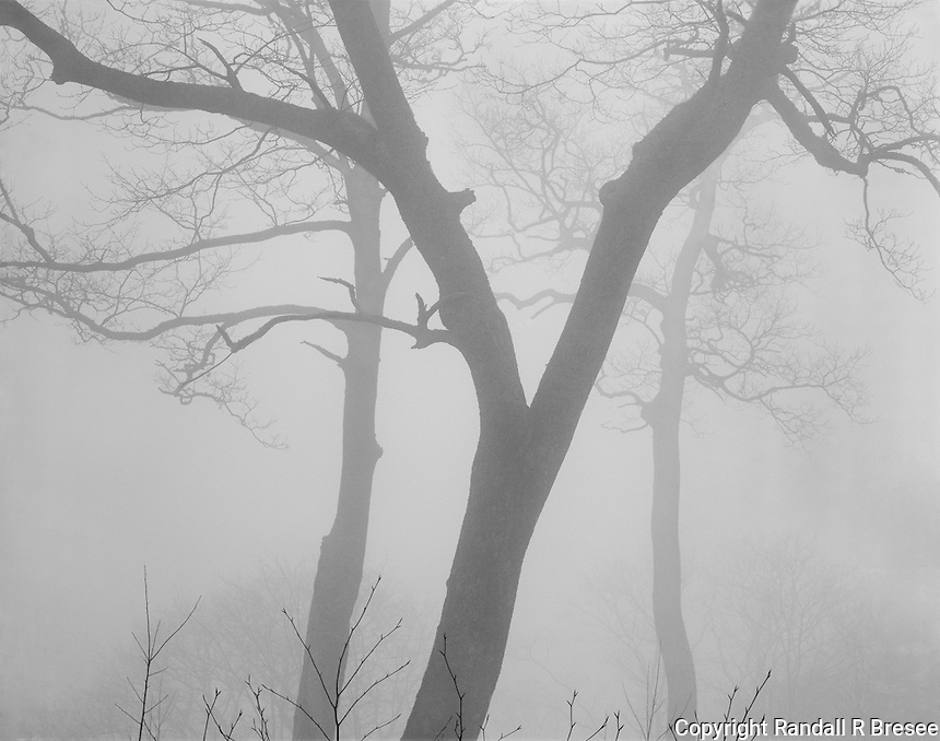 """""""Silhouettes In The Fog"""" <br /> Great Smoky Mountains National Park, Tennessee<br /> <br /> Fog often hugs the mountains in the Great Smoky Mountains National Park and heavy fog softens the scenery substantially. This photo was recorded at an elevation near 6,000 feet on Clingmans Dome Road. The light was flat so film development time was increased to expand image contrast. I believe this photograph conveys the softness of the actual scene nicely."""
