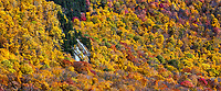 Panoramic autumn forest detail, Lincoln, New Hampshire, USA.