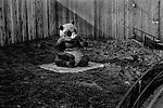 """WWF""<br /> Panda Display<br /> Washington DC Zoo<br /> Washington DC<br /> From the ""Captivity"" series<br /> © Thierry Gourjon-Bieltvedt"