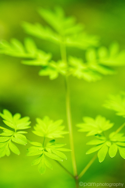 Close up image of plant leaves