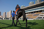 SHA TIN,HONG KONG-DECEMBER 09: Logotype,trained by Tsuyoshi Tanaka,exercises in preparation for the Hong Kong at Sha Tin Racecourse on December 9,2016 in Sha Tin,New Territories,Hong Kong (Photo by Kaz Ishida/Eclipse Sportswire/Getty Images)