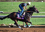 October 26, 2014:  Seeking the Sherif, trained by Ron Ellis, exercises in preparation for the Breeders' Cup Xpressbet Sprint at Santa Anita Race Course in Arcadia, California on October 26, 2014. Scott Serio/ESW/CSM