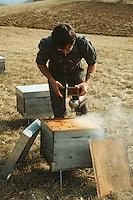 Europe/France/Aquitaine/24/Dordogne/Périgord Noir/Auriac-du-Périgord: Ecomusée de l'abeille - Apiculteur