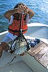 James Buehler Weighing Green Turtle