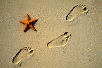 Footprints and starfish on white sand