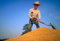 Farmer on bed of freshly harvested rice in Arkansas. Farmer. Arkansas.