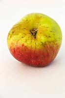 Europe/France/Normandie/Basse-Normandie/50/Batenton: Maison de la Pomme et de la Poire - Exposition de Pommes à Cidre: Variété Binet Rouge //  France, Manche, Batenton, House of the Apple and Pear Cider apples Exhibition , Binet rouge cultivar