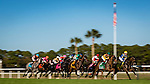OLDSMAR, FLORIDA - FEBRUARY 11: The field exits the starting gate, during the Tampa Bay Stakes at Tampa Bay Downs on February 11, 2017 in Oldsmar, Florida (photo by Douglas DeFelice/Eclipse Sportswire/Getty Images)