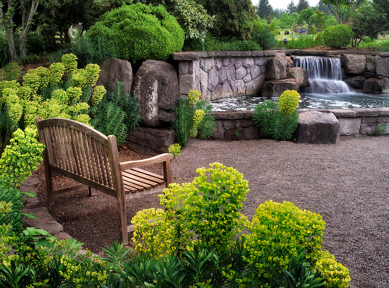Mediterranean Spurge and bench with waterfall. Oregon Garden, Oregon