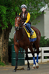25 April 2010: Lookin At Lucky with exercise rider Dana Barnes up walking to the track for his last work before Saturday's Kentucky Derby at Churchill Downs in Louisville, Kentucky.