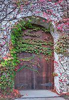Door will fall colored ivy, and wind blowing some leaves. Grgich Hills Estate. Napa Valley, California