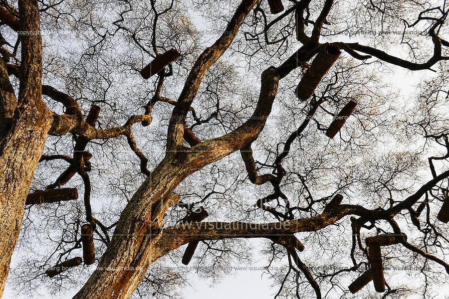 ETHIOPIA, Southern Nations, Lower Omo valley, beehives in tree  / AETHIOPIEN, Omo Tal, Bienenstoecke im Baum