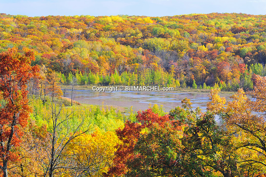 00440-010.16 Fall Color: Mix of mostly oak, aspen and birch are in peak of color.  Small lake in background. Mix of wildlife habitat. Brilliant, colorful.