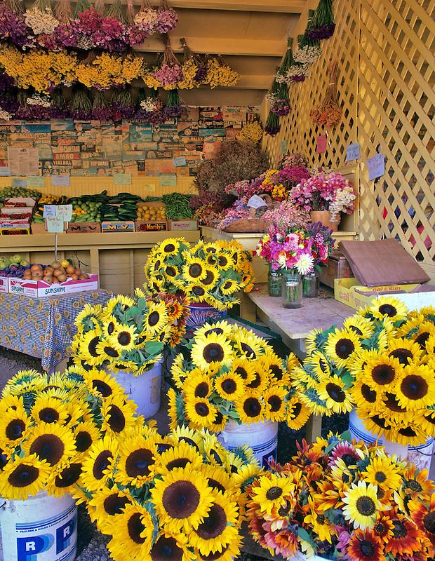 Ornamental sunflowers, fruit and vegetables at Wake Robin Farm, Oregon.