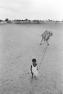 A young boy born into slavery works to retrieve water from a well with a camel in Boutlimit, Mauritania  - Child labor as seen around the world between 1979 and 1980 – Photographer Jean Pierre Laffont, touched by the suffering of child workers, chronicled their plight in 12 countries over the course of one year.  Laffont was awarded The World Press Award and Madeline Ross Award among many others for his work.
