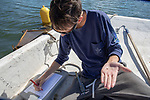Colin Eimers Measuring Oysters, Sasanoa River