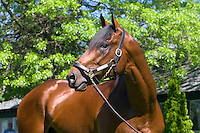 Quality Road (by Elusive Quality - Kobla, by Strawberry Road - various racing images