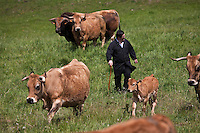 Europe/France/Midi-Pyrénées/12/Aveyron/Aubrac/Laguiole: Elevage Race Aubrac d' Alain Dijols ferme de Lacaune près de Laguiole - Lucien Conquet Boucher Charcutier choisit ses bêtes [Non destiné à un usage publicitaire - Not intended for an advertising use]
