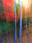 Abstract image of trees with fall color created by movement