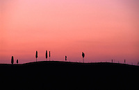 Cypress trees silhouetted at sunset, Tuscany, Italy.