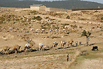 Caravan, 40 km west of Mekele on  the highlands of Ethiopia. Camels are loaded with hay which will be used to feed the animals in the desert