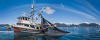 Commercial Fishing cape purse seiner Nicholas Michael draws a net full of fish tight during the 2006 Herring opener in Sitka Sound, Alaska.