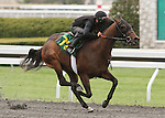 April 03, 2014: Hip 72 War Front - Ask Me When consigned by Wavertree Stables worked 1/8 in 09:4.  Candice Chavez/ESW/CSM