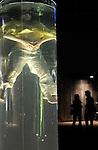 Noustube#2....Choregraphie : MULLER Jorg..Decor : DELANGLE Mathieu..Avec :..MULLER Jorg..GALLEZOT Cendrine..Lieu : Parvis du Quartz..Ville : Brest..Le : 26 02 2009..© Laurent Paillier / www.photosdedanse.com..All rights reserved