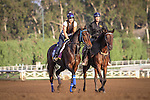 October 27, 2014: Stanwyck exercises in preparation for the Breeders' Cup Distaff at Santa Anita Park in Arcadia, California on October 27, 2014. Zoe Metz/ESW/CSM