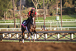 October 27, 2014: Conquest Harlanate exercises in preparation for the Breeders' Cup Juvenile Fillies Turf at Santa Anita Park in Arcadia, California on October 27, 2014. Zoe Metz/ESW/CSM