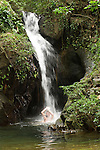 Cockscomb Basin Wildlife Sanctuary, Belize, Central America; view of Ben's Bluff Waterfall with two swimmers enjoying the pool of water at it's base , Copyright © Matthew Meier, matthewmeierphoto.com All Rights Reserved