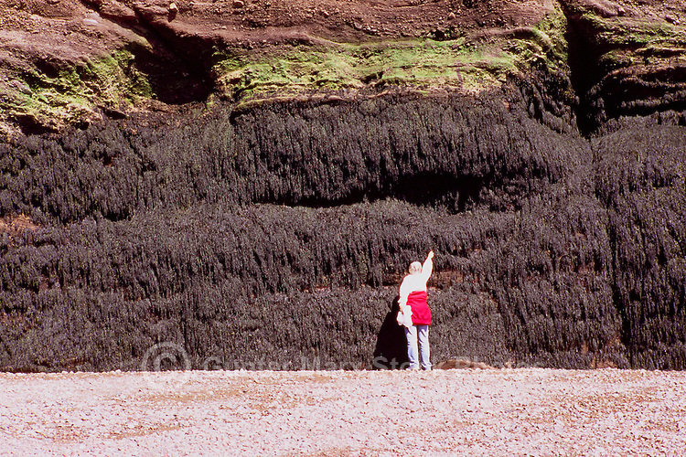 At The Hopewell Rocks, NB, New Brunswick, Canada - Reaching for the Seaweed High Tide Mark at Low Tide, along Bay of Fundy Shoreline