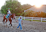 Mucho Macho Man works out at Belmont Park on June 10, 2011 for the Belmont Stakes.