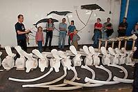 Skelett, Knochen eines Pottwal, Pott-Wal, Pott - Wal, Besuchergruppe in einer Ausstellung über Wale in Andenes, Nord - Norwegen, Physeter macrocephalus, Physeter catodon, Potwal, Cachalot, Kaschelot sperm whale, great sperm whale, cachalot