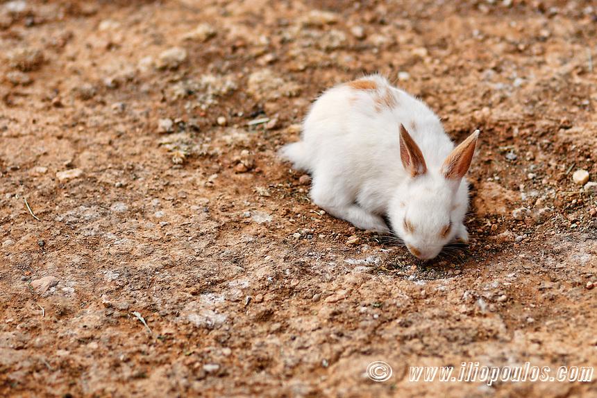 Rabbit in the zoo