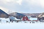 A horse farm in Townshend, VT, USA