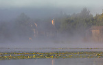The autumn fog begins to lift revealing a north woods home on the shores of a wilderness lake in northern Wisconsin. A white-tailed deer is feeding on a strip of land in front of the home.
