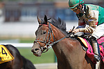 May 17, 2013, I'm Mom's Favorite (#8), Sheldon Russell up, wins race 8, the 28th runniing of the Ms. Preakness Pink Warrior Stakes at Pimlico Race Course in Baltimore, MD. Trainer is Anthony Dutrow. (Joan Fairman Kanes/Eclipse Sportswire)