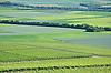 Weinberge und Felder im Rheinhessischen Hügelland