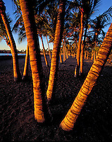 Striking photo of palm tree trunks in black sand at Ahaehoomalu Bay, Big Island