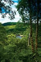 The Great Trossachs Forest, Glen Finglas Estate, Loch Lomond and the Trossachs National Park, Stirlingshire