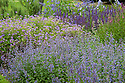 Mixed herbaceous border in blues and purples, late June. Plants include Geranium, Catmint (Nepeta), and Salvia.