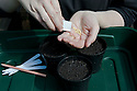Sowing melon seeds 1 of 4. Germination can be hit and miss, so it's wise to sow seeds in pots and keep them warm until seedlings appear.